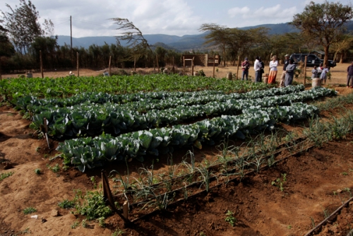 The Ngeya Training Garden in Maai Maihu, Kenya